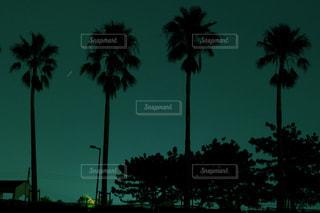 ヤシの木と夜空 - No.847798