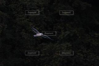 鳥 - No.859455