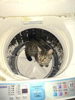 洗濯機の上に座って猫の写真・画像素材[848479]