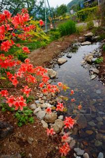 近くのフラワー ガーデンの写真・画像素材[1207504]