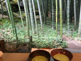 鎌倉、報国寺の竹林の写真・画像素材[848046]