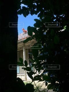 隙間から覗くシーサーの写真・画像素材[856584]