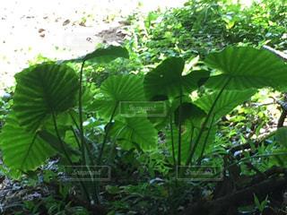 近くの緑の植物をの写真・画像素材[856586]