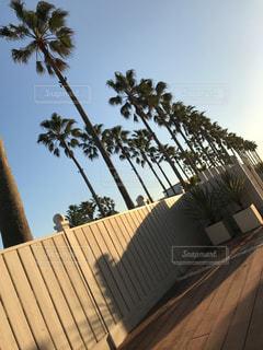 建物の側面にあるヤシの木の写真・画像素材[848212]