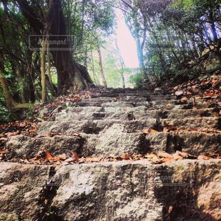 石段の登山道の写真・画像素材[858817]