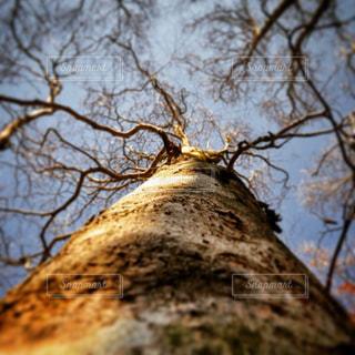 大きな木の写真・画像素材[858819]