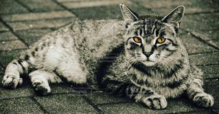 地面に横になっている猫の写真・画像素材[858820]