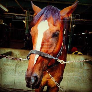 馬房のお馬ちゃんの写真・画像素材[915162]