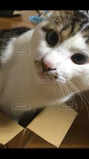 近くに猫のアップの写真・画像素材[849742]