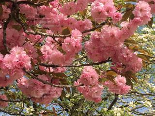 近くの植物にピンクの花のアップの写真・画像素材[1108577]