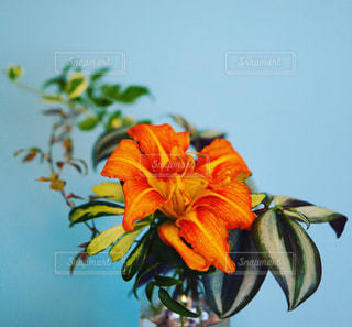 花のある暮らしの写真・画像素材[849069]
