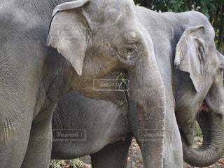 象の赤ちゃんの写真・画像素材[850265]