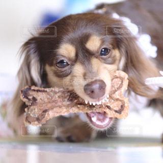 近くに犬のアップの写真・画像素材[849719]
