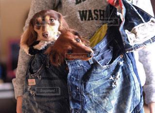 着ぐるみを着た犬の写真・画像素材[849726]