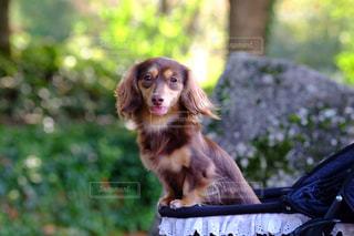 ベンチに座っている犬の写真・画像素材[849780]