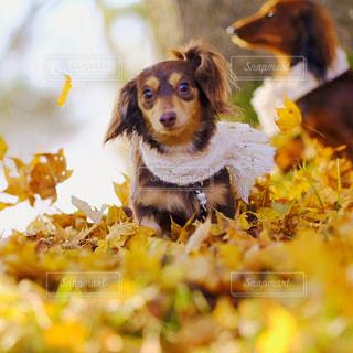 地面に横たわっている犬の写真・画像素材[849930]
