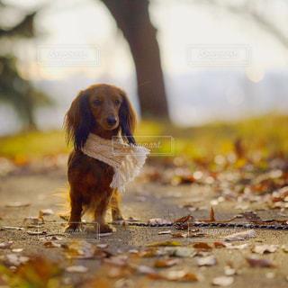 近くに犬のアップの写真・画像素材[849931]
