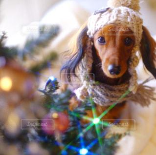 着ぐるみを着た犬の写真・画像素材[849932]