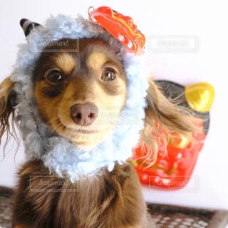 帽子をかぶった犬の写真・画像素材[849937]