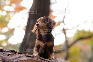 枝の上に座って犬の写真・画像素材[850434]