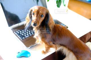 ノート パソコンのキーボードの上に横たわる犬の写真・画像素材[850435]