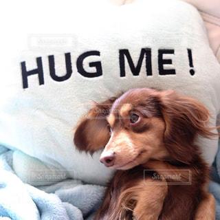 ベッドの上に横たわる犬の写真・画像素材[850578]
