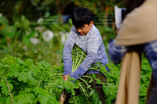 草の中に立っている小さな男の子の写真・画像素材[850601]
