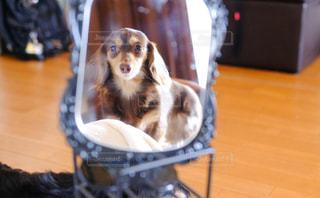 テーブルの上に座っている犬の写真・画像素材[857685]