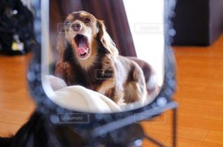 テーブルの上に座っている犬の写真・画像素材[857687]