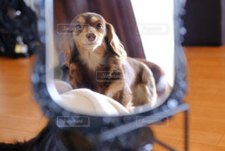 テーブルの上に座っている犬 - No.857689