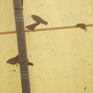 空を飛んでいる鳥の写真・画像素材[849883]