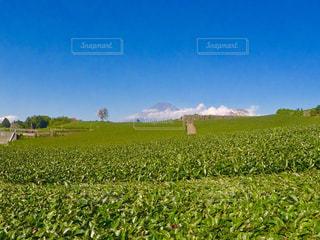 富士山と茶畑 - No.849929