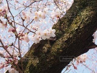 自然の写真・画像素材[26459]
