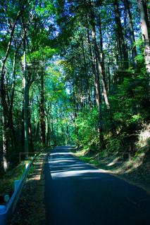 森の中の道路 - No.895686