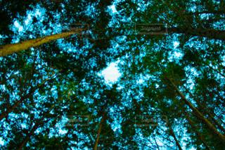 森の中から見上げた空 - No.904959