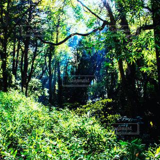 森の中を照らす木漏れ日 - No.906593