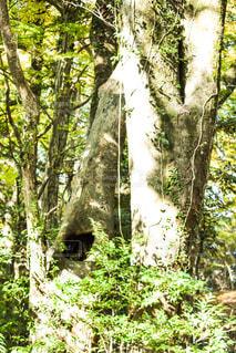 森を歩く黒い熊 - No.914066