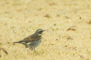 草の上に鳥立ってカバー フィールド - No.980201
