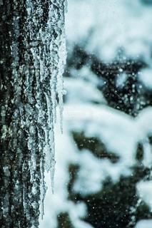 近く雪に覆われた木のアップ - No.980210