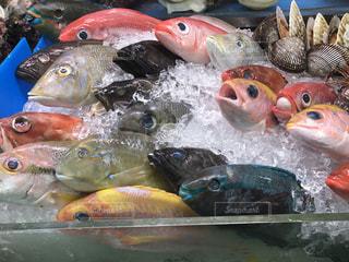 水の中の魚の群れの写真・画像素材[851370]