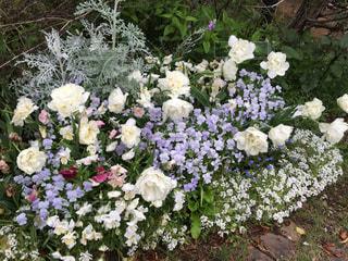 植物の白い花の写真・画像素材[852471]
