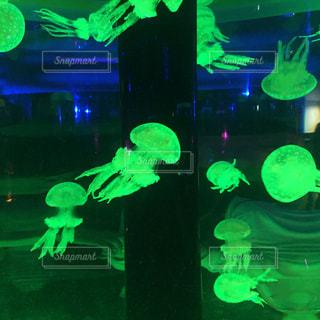 水族館のクラゲの写真・画像素材[852549]