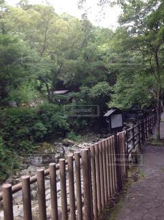 滝の写真・画像素材[853958]