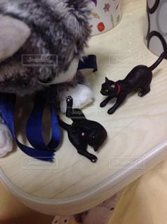 猫のぬいぐるみの写真・画像素材[1109249]