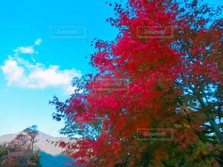 近くの木のアップの写真・画像素材[852005]