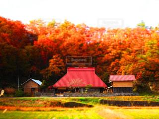夢で観たような秋の風景 - No.852584