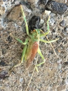 昆虫の写真・画像素材[26238]