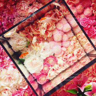 花に囲まれ金魚は泳ぐの写真・画像素材[1529507]