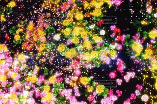 デジフルなお花畑さの写真・画像素材[1537092]