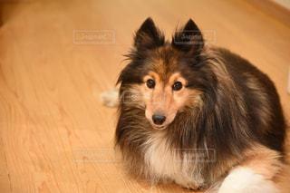 愛犬の写真・画像素材[1830499]